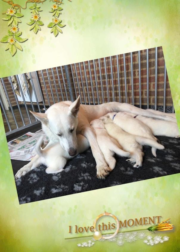 Indy 5 weken pups IMG_3453