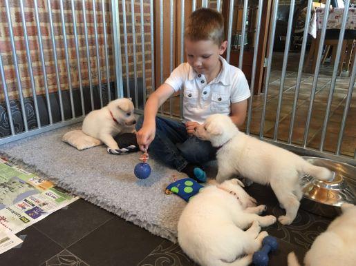 Pups 5 weken spelen