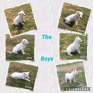 pups week 7 2019 boys