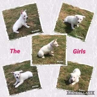 pups week 7 2019 girls
