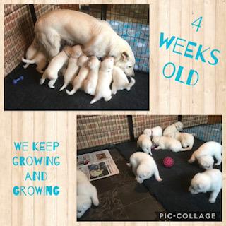 4 weken oud Jewel 2020