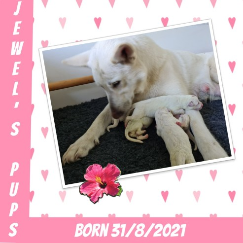 Collage 2021-08-31 15_48_04 geboorte